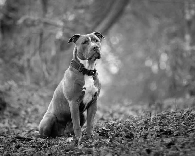 Wimborne dog training