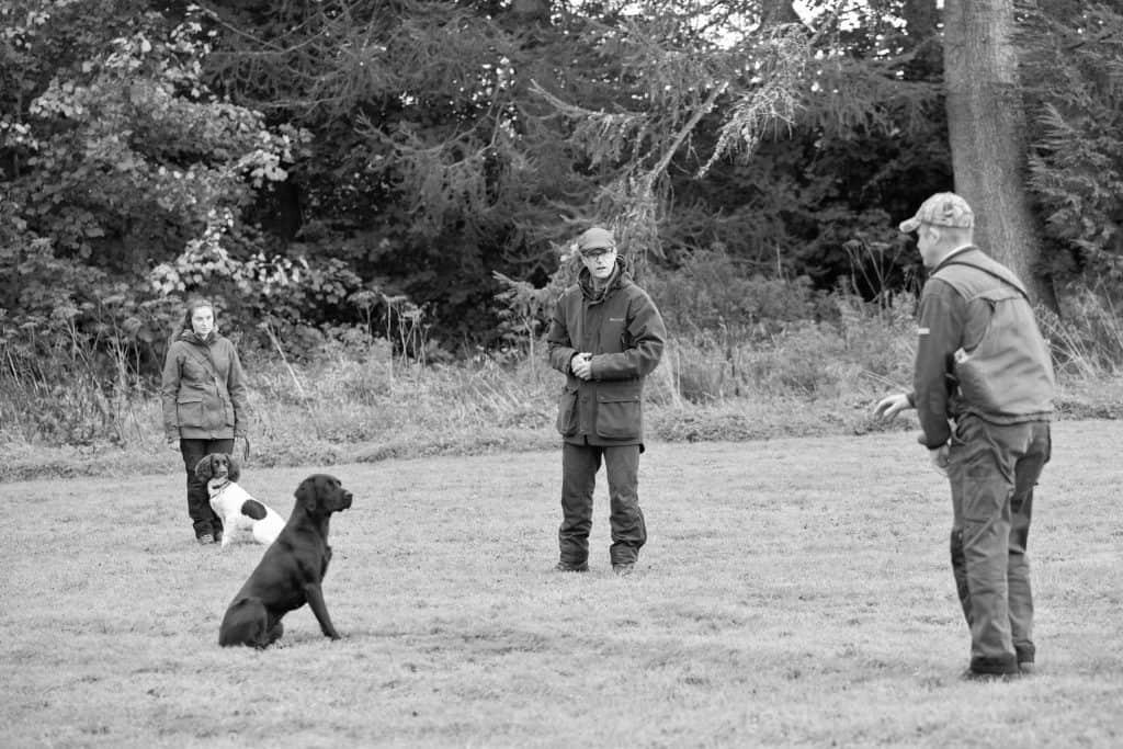 Dog training in Dorset. Pet gun dog training