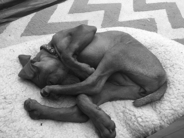 puppy training dorset