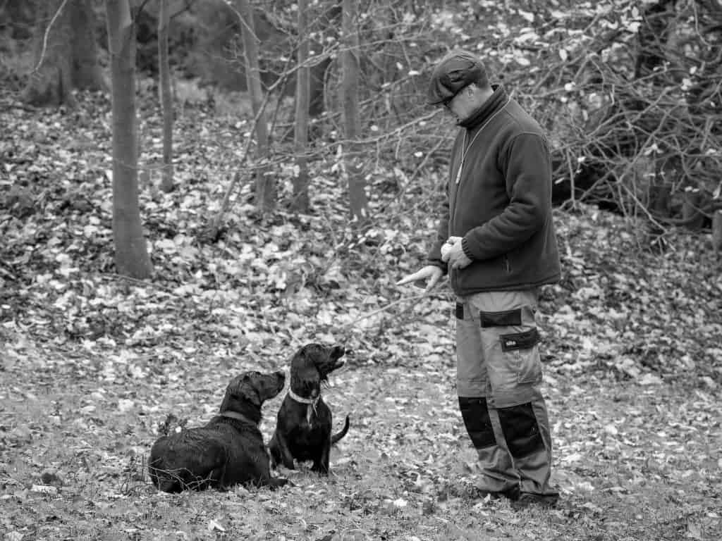 Pet gun dog training equipment