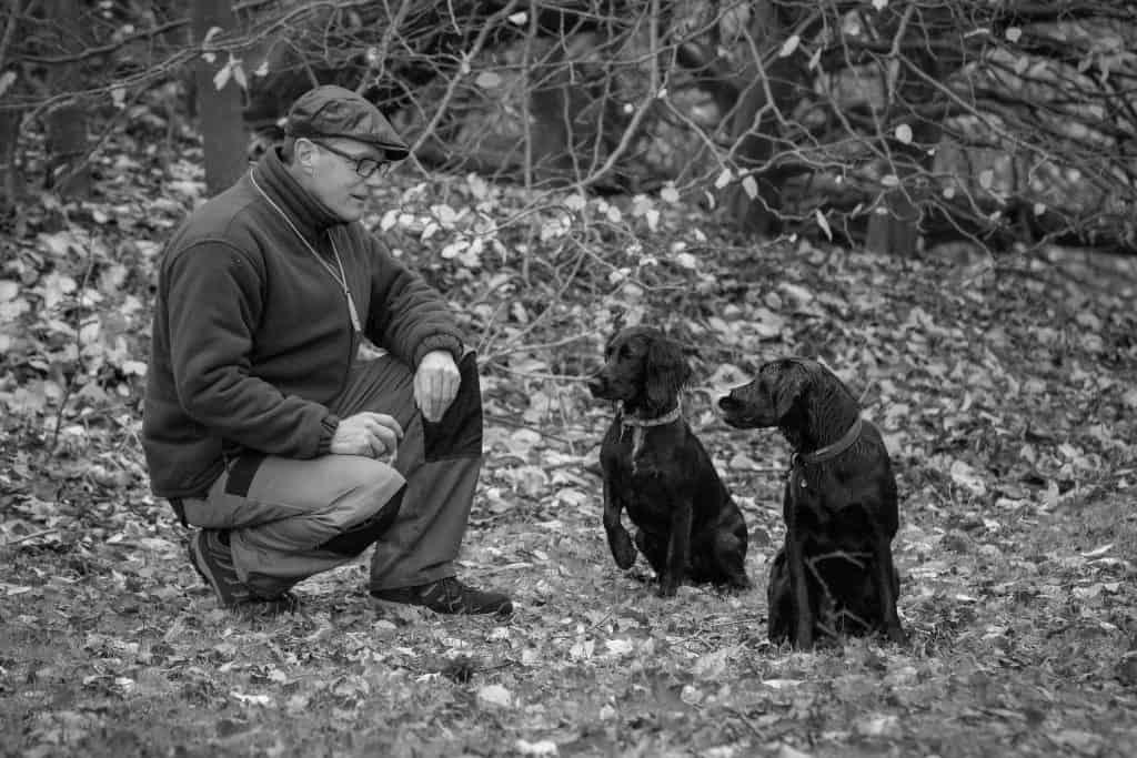 pet gun dogs wear a collar